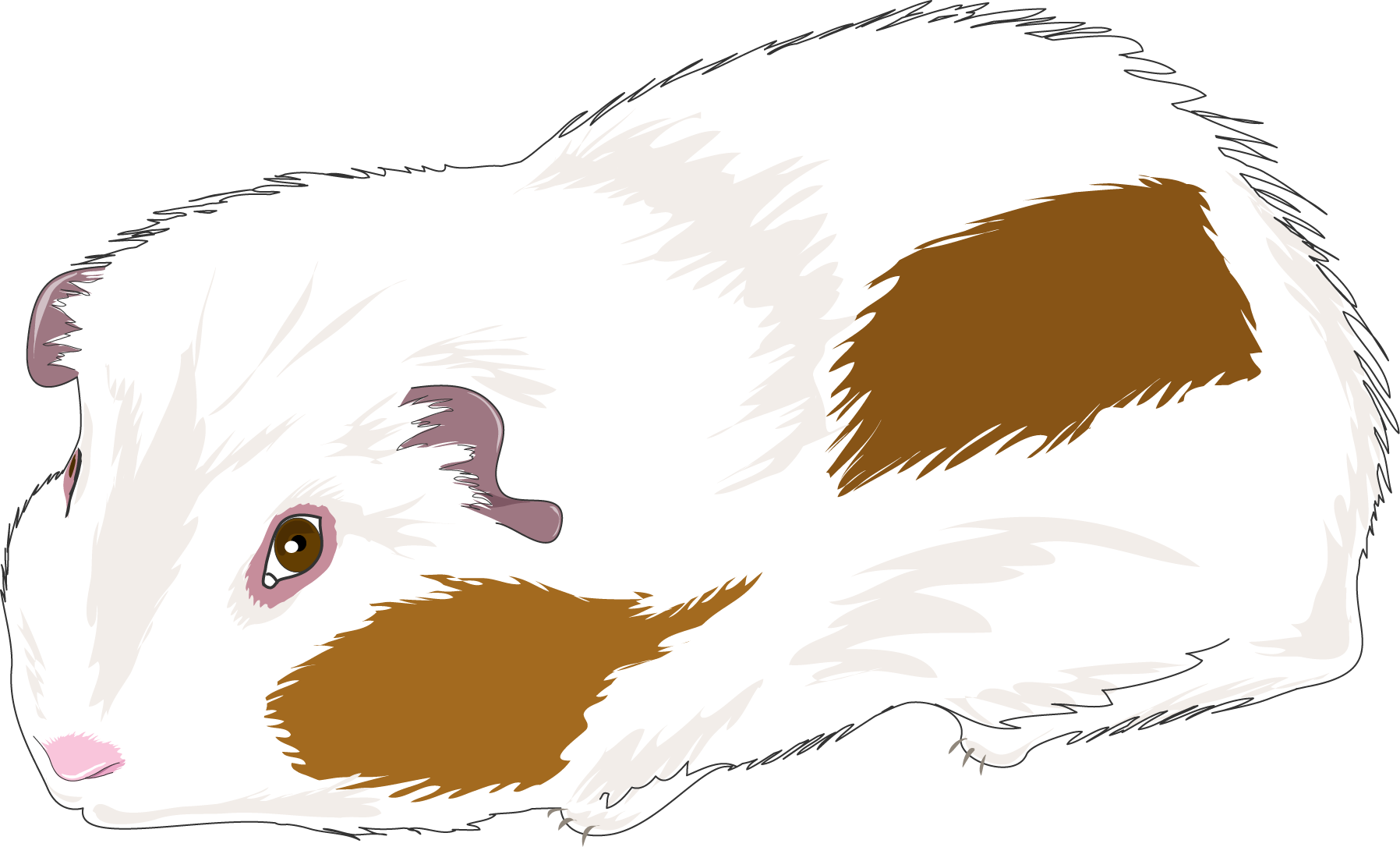 banner stock Guinea Pig Clipart at GetDrawings