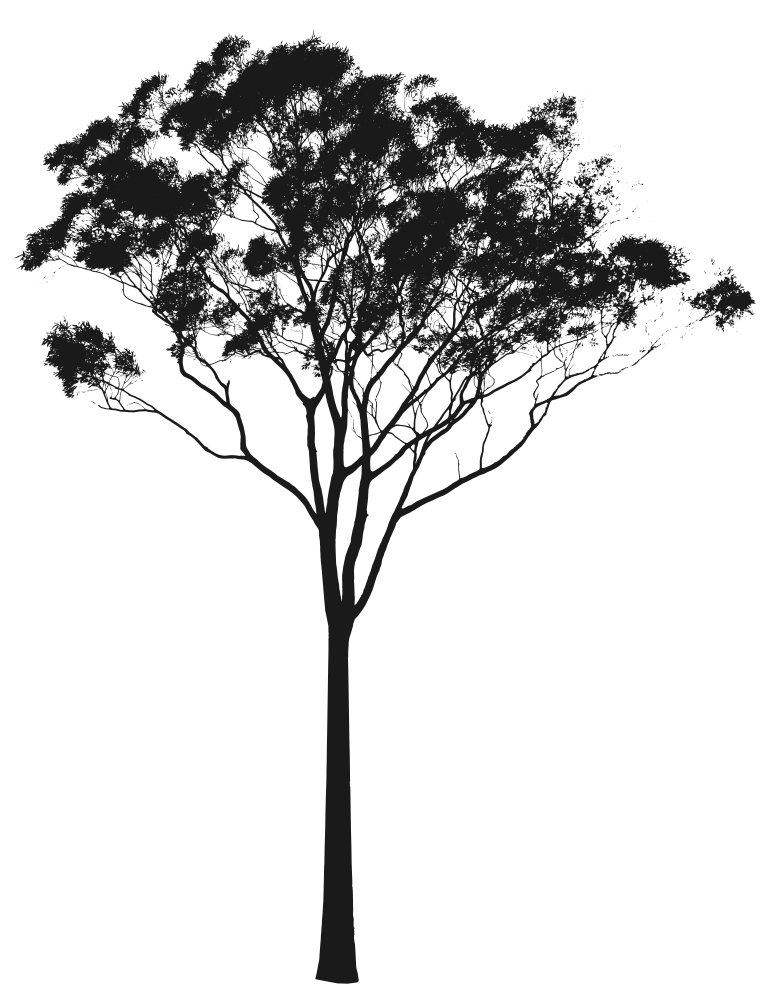 image transparent download Eucalyptus or gum tree. Vector bushes illustrator