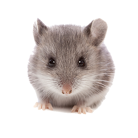 clip Hamster clipart. Png hd transparent images