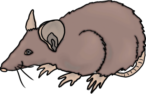 banner free Capybara Clipart at GetDrawings