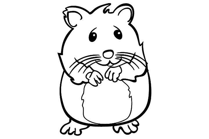 black and white download Hamster clipart color. Drawing google search humane