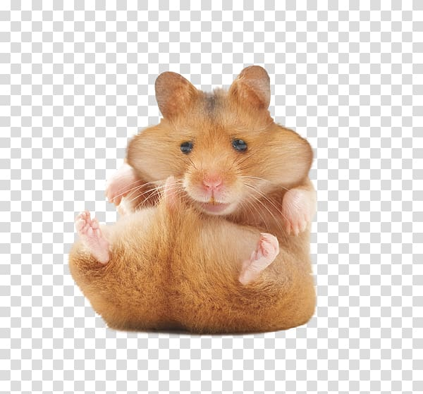 vector black and white library Hamster clipart rodent. Golden gerbil your .
