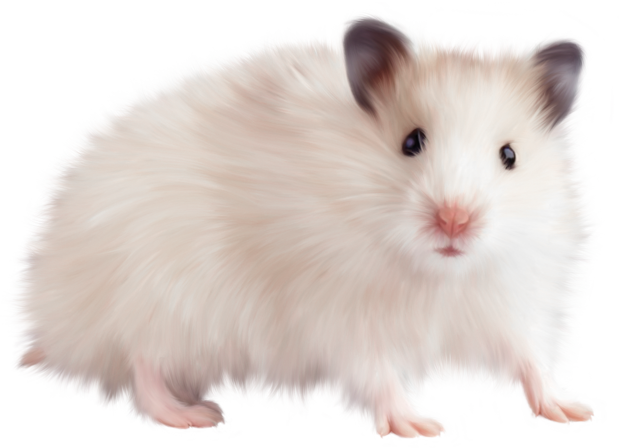 svg library Hamster png hd images. Transparent mice