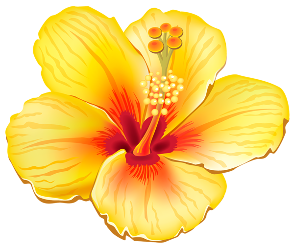 clip freeuse download Yellow Exotic Flower PNG Clipart Picture