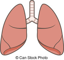 vector free Transparent free download on. Lungs clipart for kids