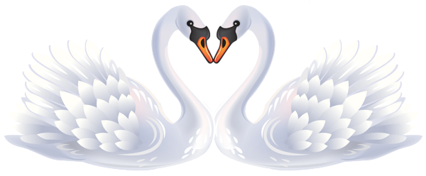 banner transparent stock Valentine swans png pekn. Hearts clipart swan
