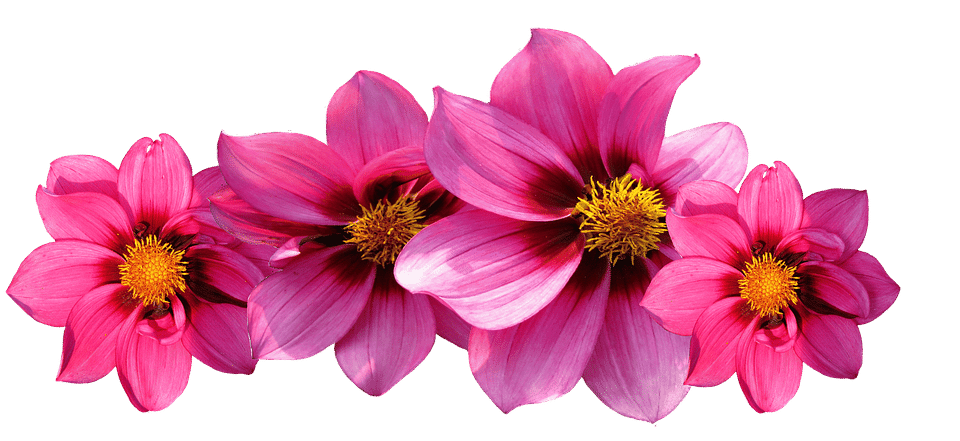 svg Types of Flowers