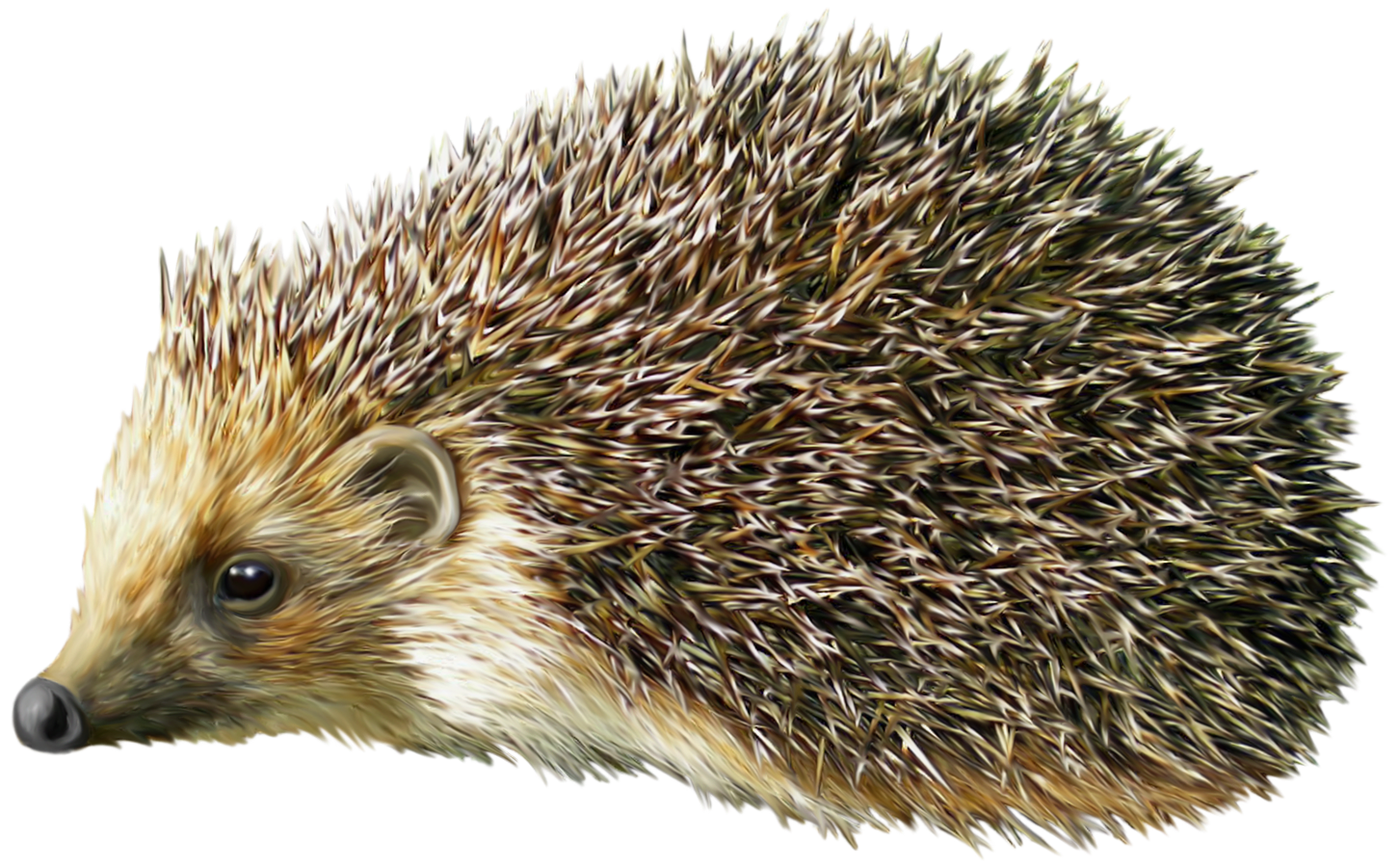 clipart free Hedgehog clipart. Png best web