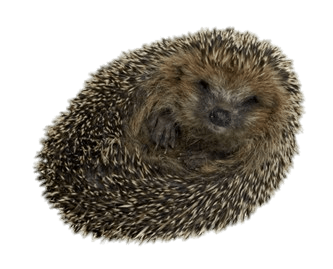 transparent download Hedgehog transparent. Rolled up png stickpng