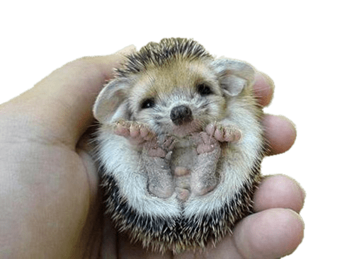 svg black and white library Flipped over png stickpng. Hedgehog transparent