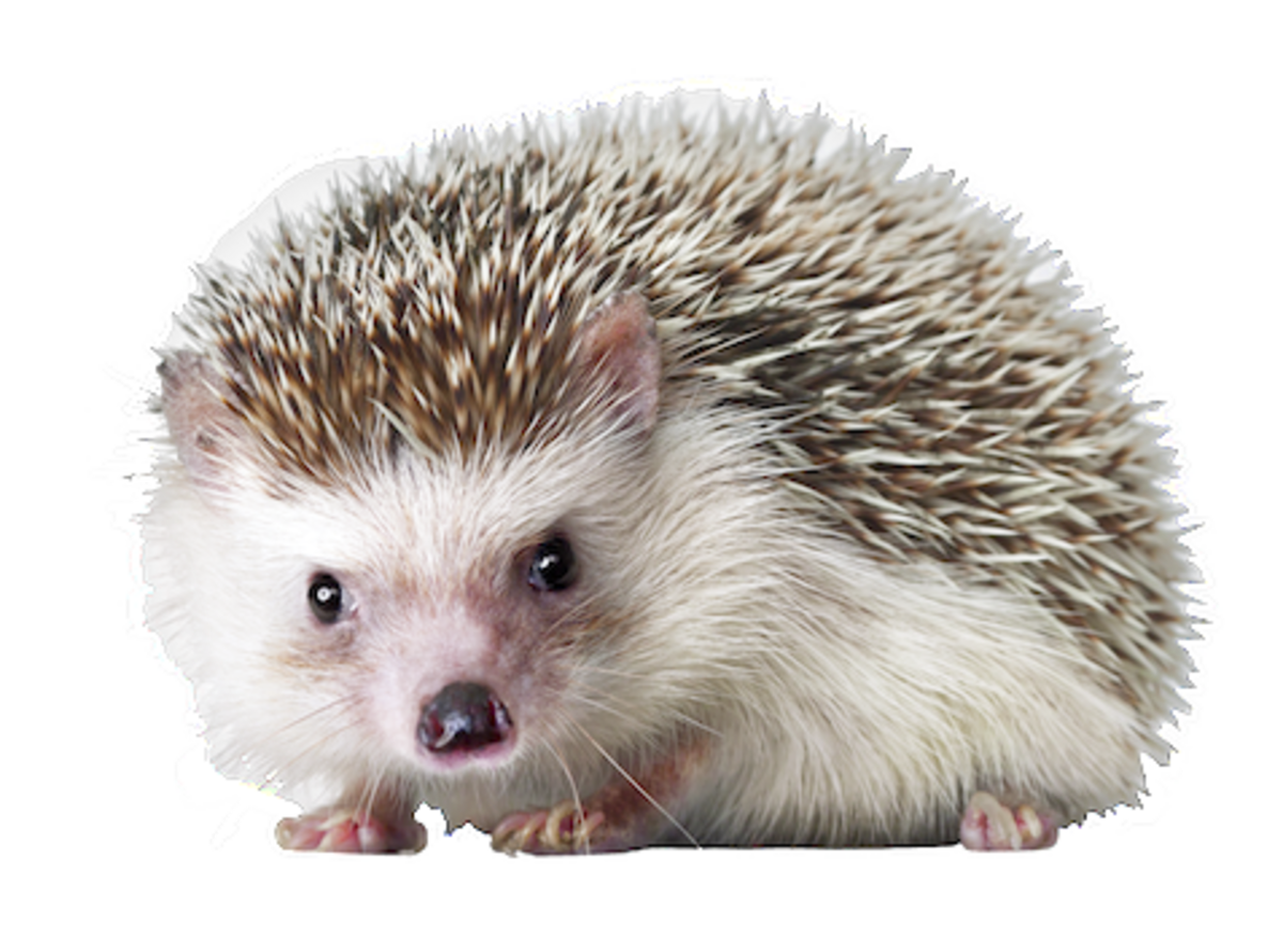 vector library library Hedgehog transparent. Png
