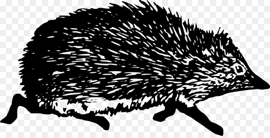 vector black and white Hedgehog transparent black. Domesticated and white clip