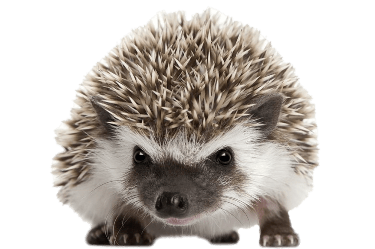 clip royalty free library Front view png stickpng. Hedgehog transparent