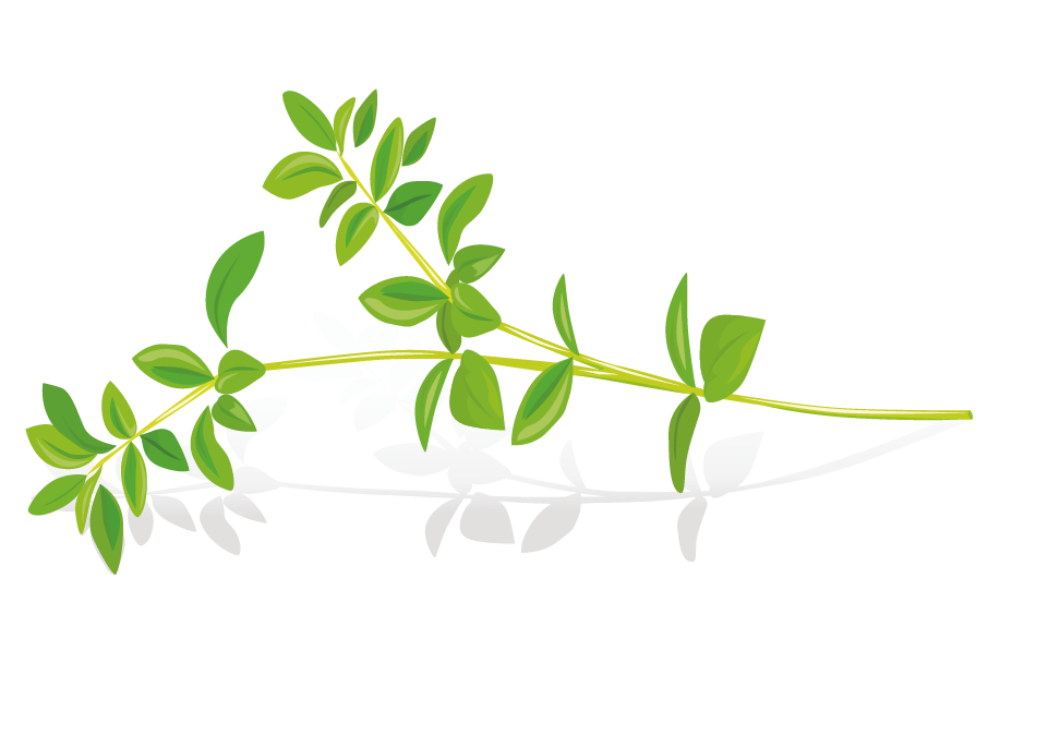 clip black and white download Pickled cucumber Herb Leaf Clip art