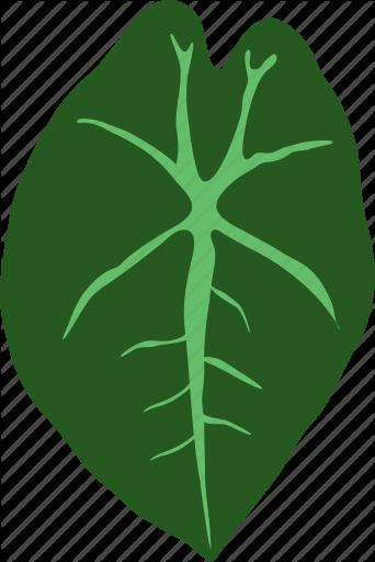 banner free download herb vector herbal #113541534