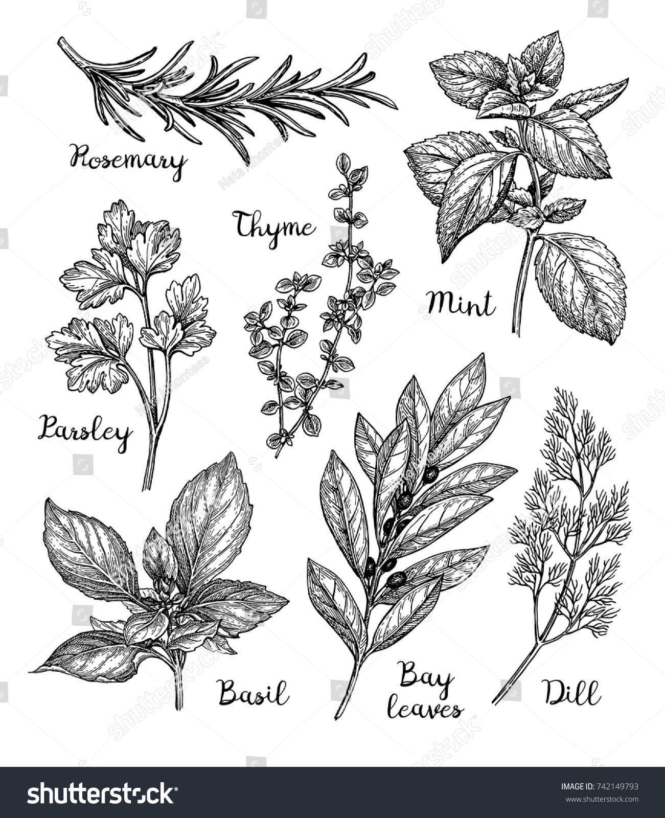 png free download Herbs set