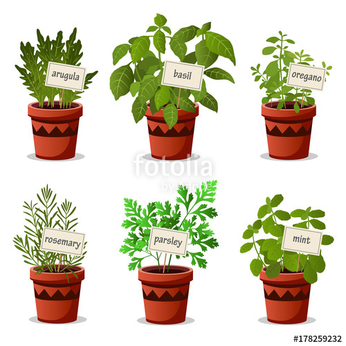 jpg free stock Set of culinary herbs in pots with name plates with arugula