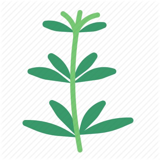 vector royalty free stock Herb flat