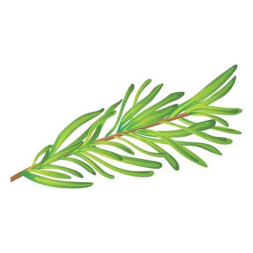 png stock Rosemary herb illustration
