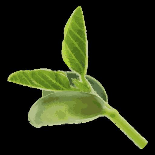 png free Bean seedling herb illustration