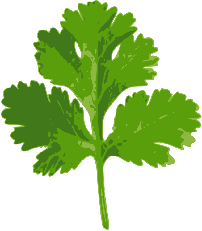 clip royalty free library Coriander Parsley Indian cuisine Herb Ghormeh sabzi free commercial