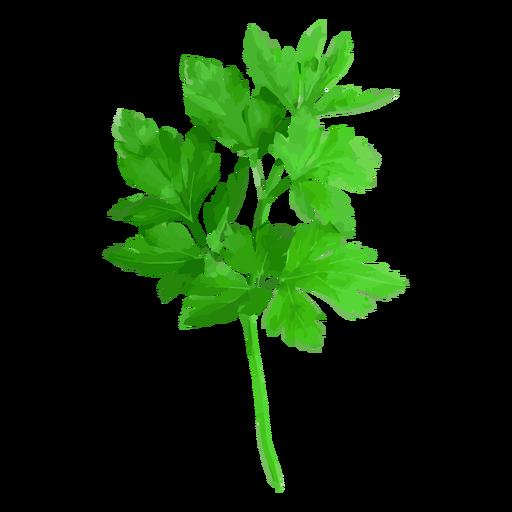 svg freeuse download Cilantro coriander herb illustration