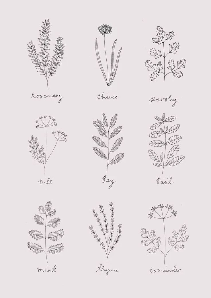 jpg transparent library herbs drawing draw #138913066