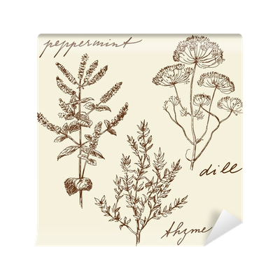 clipart stock hand drawn herbs Wall Mural