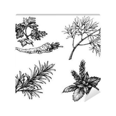 graphic black and white stock Vegetables and herbs drawings on white