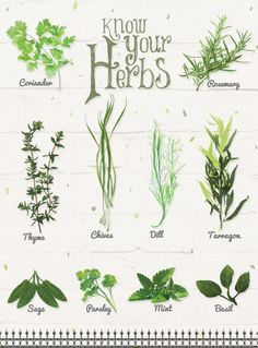 freeuse library herb drawings