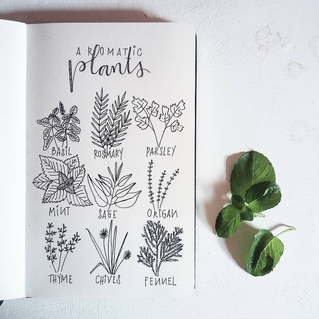 clipart freeuse stock Bullet journal ideas plant. Basil drawing sage