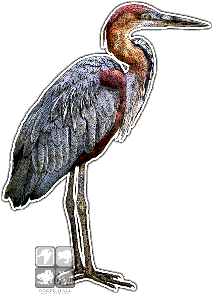 png freeuse download Goliath Heron
