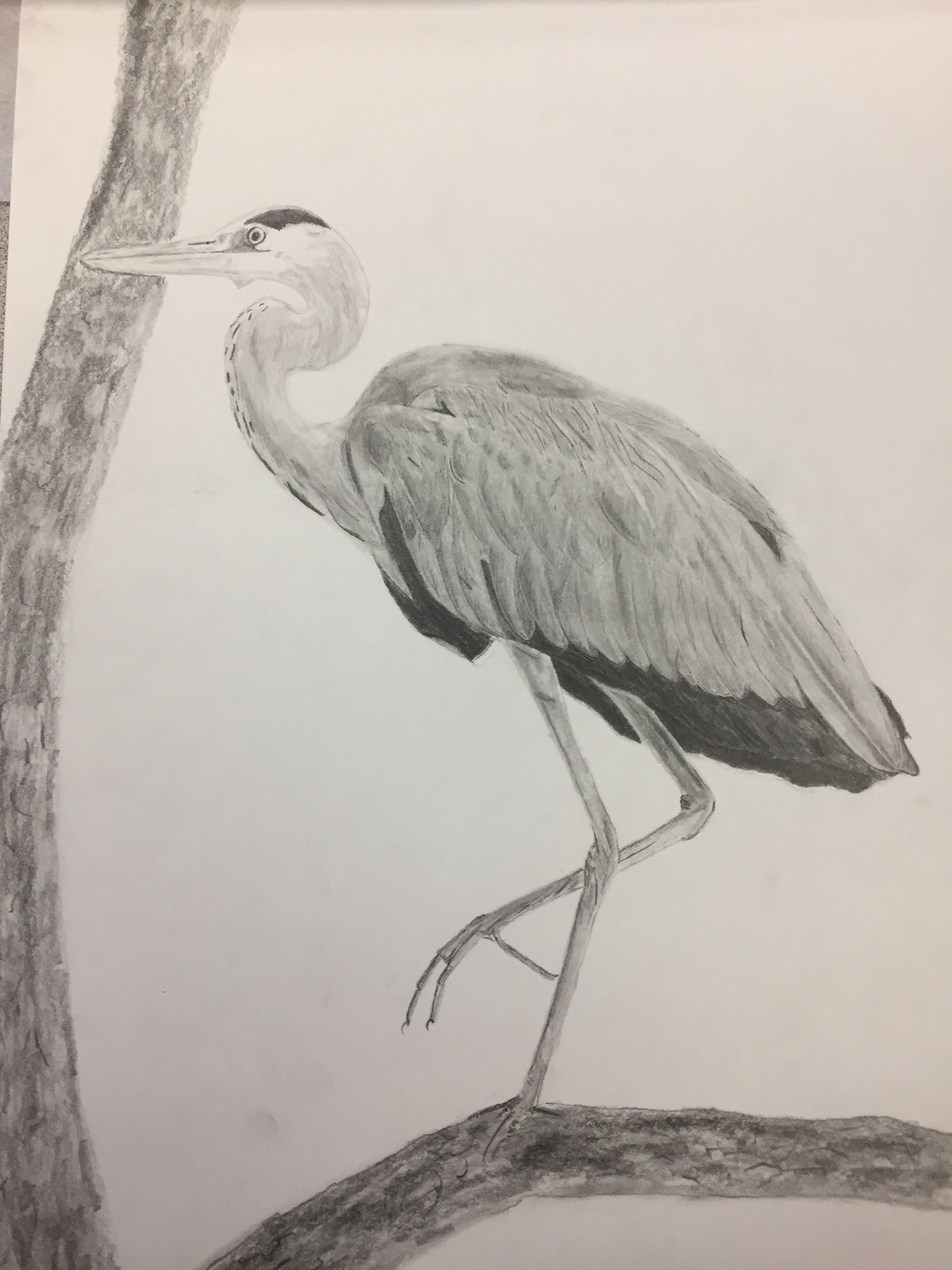 banner black and white library Grey heron pencil drawing