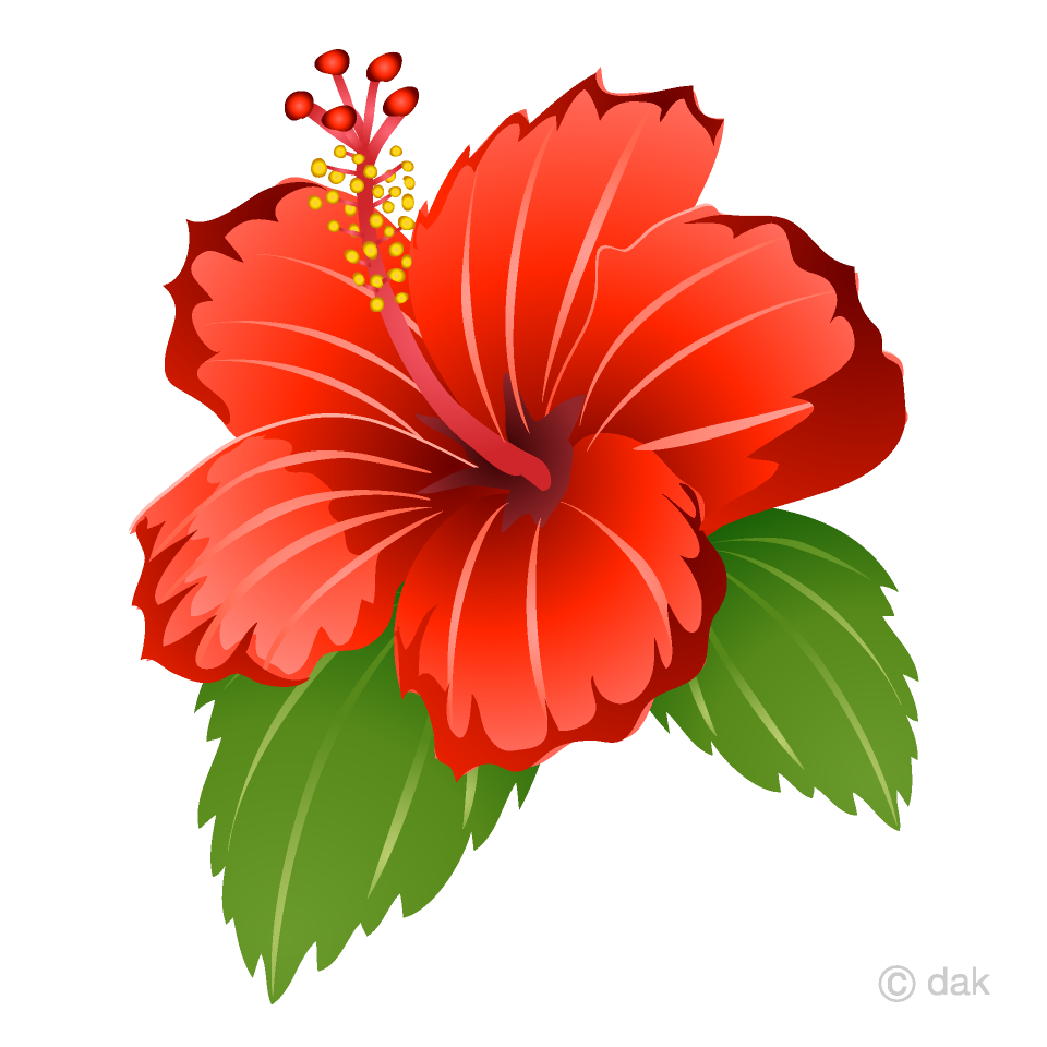 graphic royalty free library Free picture illustoon . Hibiscus clipart.