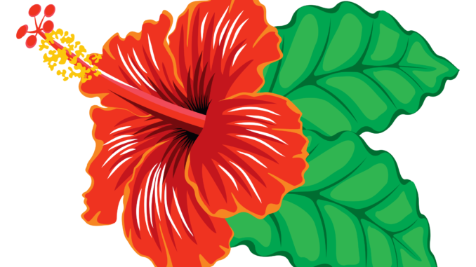 svg royalty free download Hibiscus clipart.  flower vector images