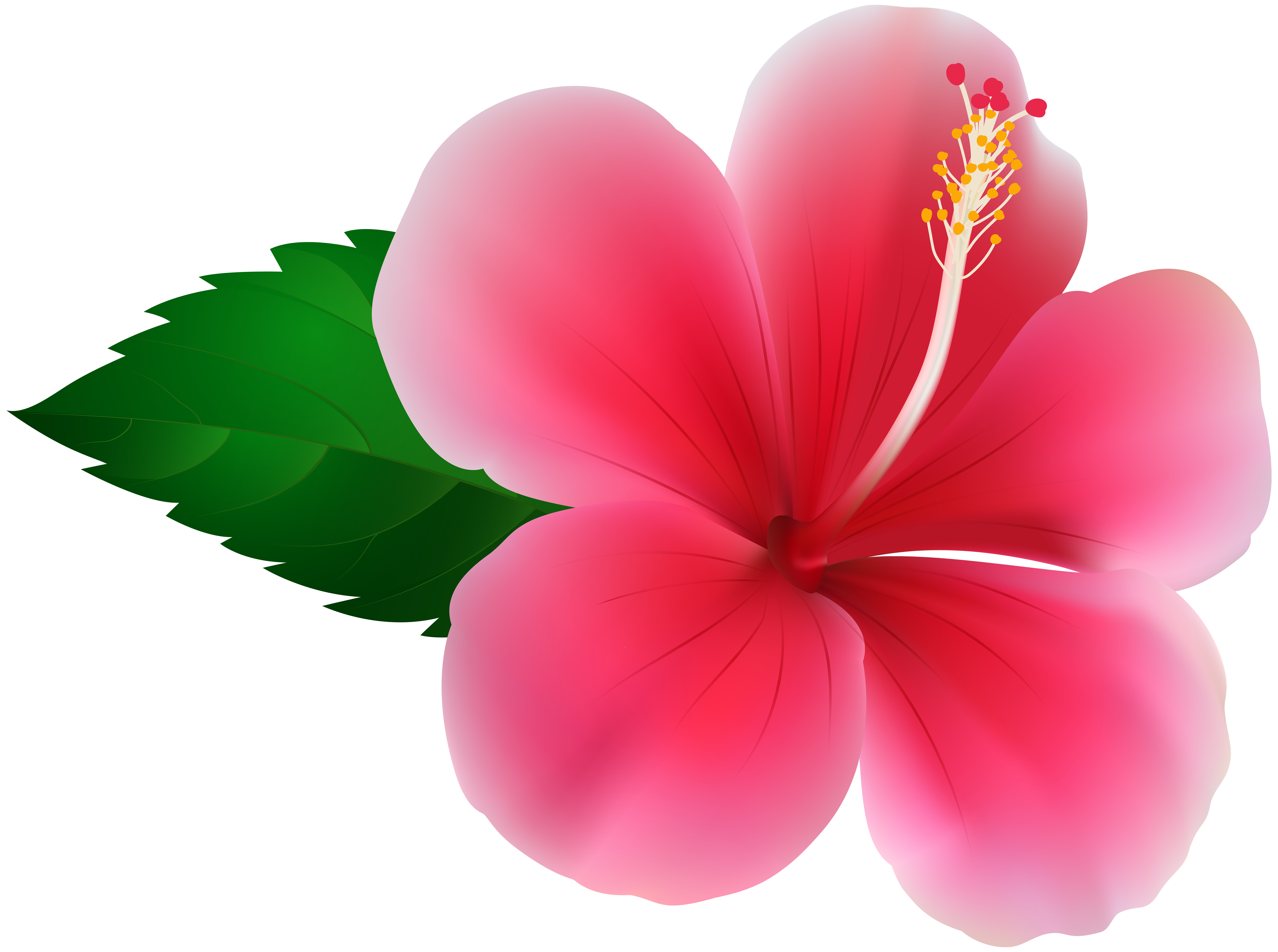 png library library Pink png clip art. Hibiscus clipart.