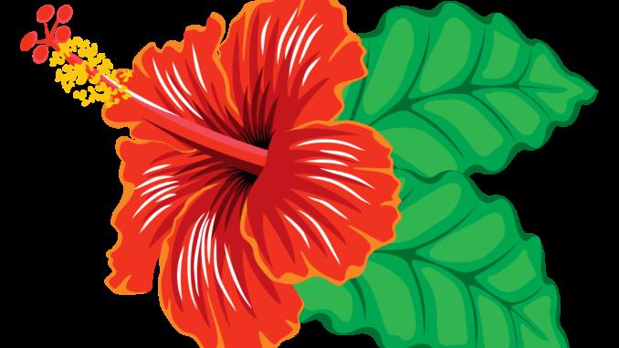 transparent FREE Hibiscus Clipart images