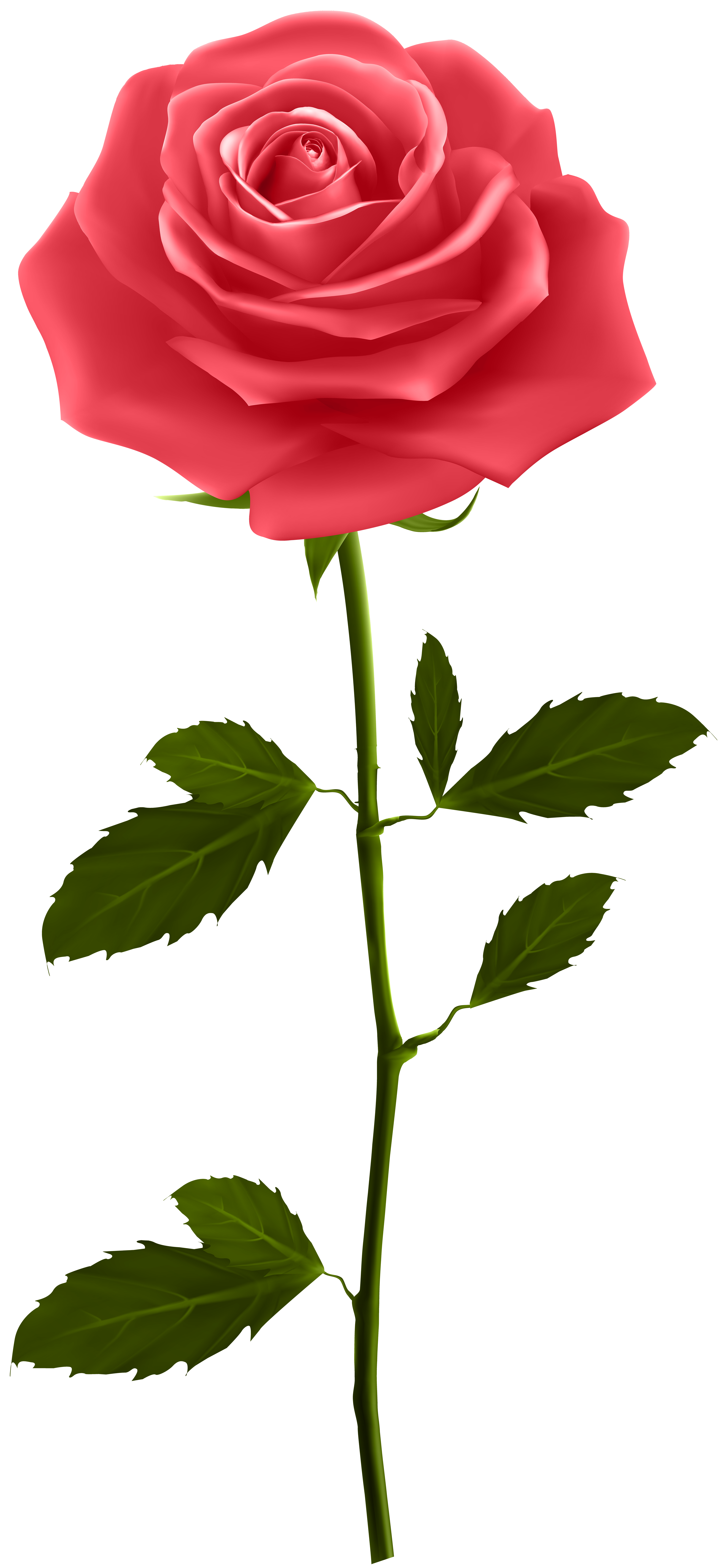 free stock High clipart. Red rose with stem