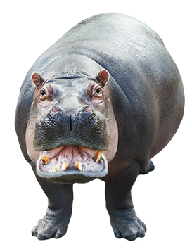 png freeuse library Hippopotamus clipart realistic animal. Cartoon hippo female with