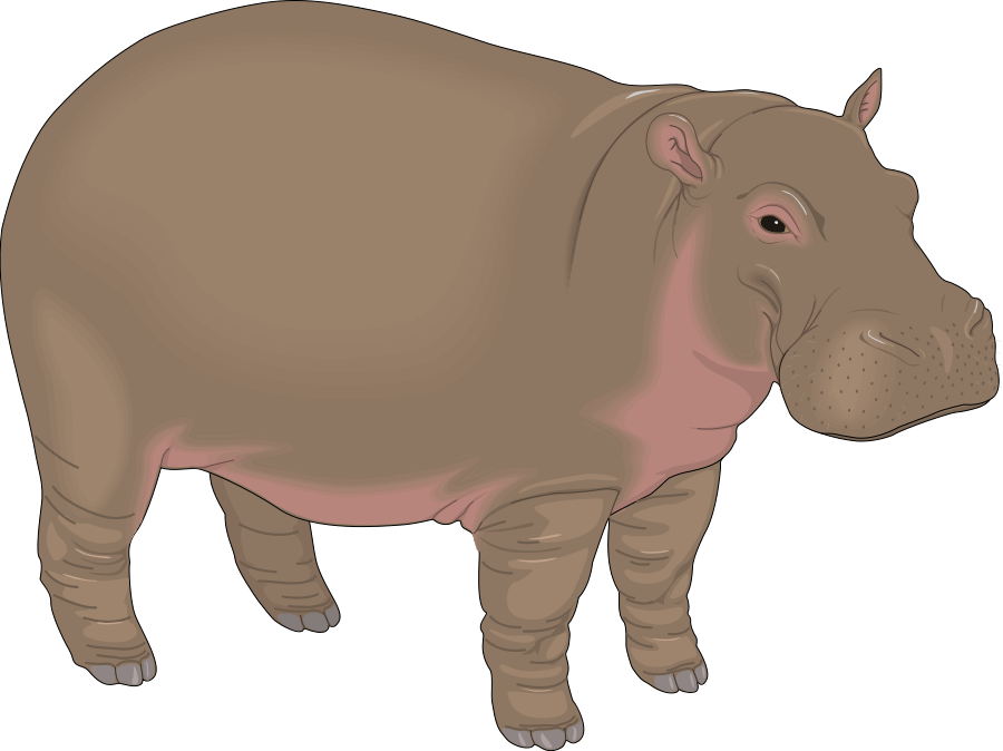 png free Kid transparent free . Hippopotamus clipart realistic animal