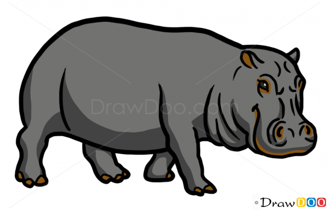 picture transparent download Hippopotamus clipart realistic animal. How to draw wild
