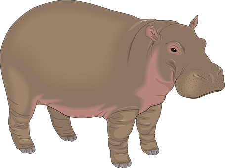 transparent stock Hippopotamus clipart realistic animal. Hippo transparent background free