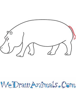 image transparent stock Hippopotamus drawing. How to draw a.