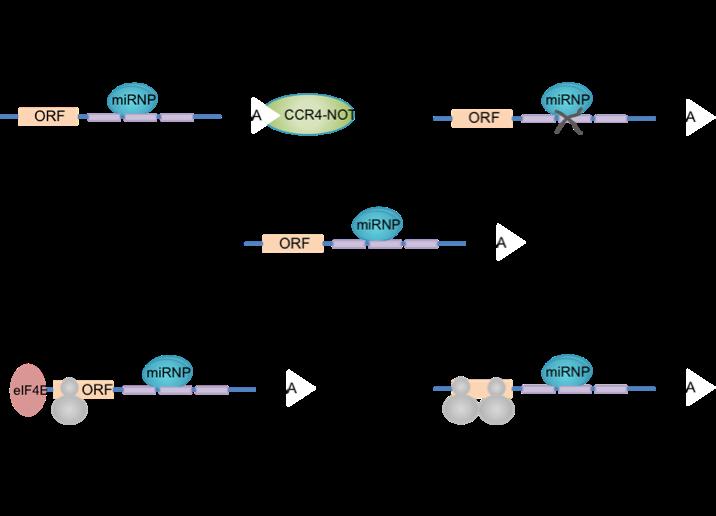image free MicroRNA GO annotation manual