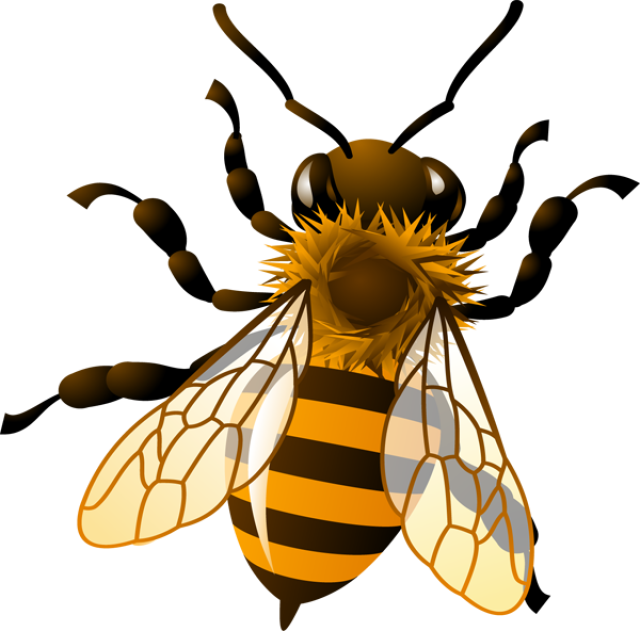 banner free library Honey Bee Clipart