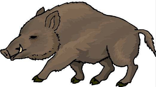 png freeuse download Hog clipart. Free cliparts download clip