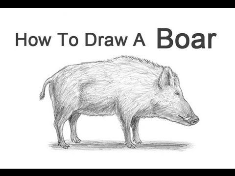 jpg library library How to draw a. Hog drawing drawn