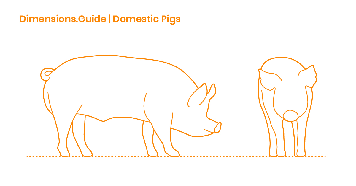 vector free Hog drawing profile. Domestic pig dimensions drawings