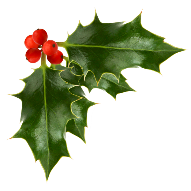 png download Holly transparent. Berries image festive background