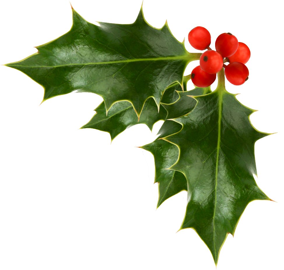 clipart transparent ivy transparent christmas #98290081